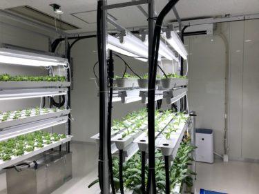 【植物工場】『キレイヤサイ』工場見学レポ!安全・健康・調理簡単な低カリウムほうれん草の特徴と感想